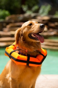 dog-floatation-collar